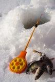 fiskeis Royaltyfri Fotografi