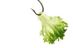 fiskekrokgrönsallat Royaltyfri Bild