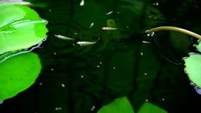Fisken äter mat arkivfilmer