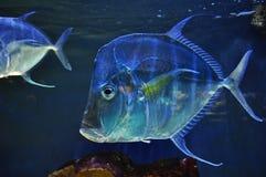 Fisken Royaltyfria Foton