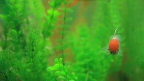 Fisken av olik art simmar i ett stort akvarium lager videofilmer