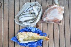 Fisken fångade 10 timmar tidigare vid en lokal fiskare royaltyfri bild