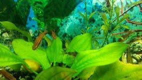 Fisken i akvariet lager videofilmer