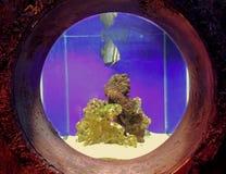 Fisken i a tankar Royaltyfri Bild