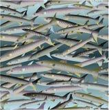 Fisken mönstrar Arkivfoton