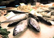 Fisken marknadsför royaltyfri fotografi