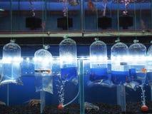 Fisken shoppar till salu Arkivbilder