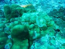 Fisken som är undervattens- på Similan Marine National, parkerar Fotografering för Bildbyråer
