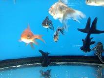 Fisken tankar in Fotografering för Bildbyråer