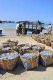 Fiskerier lokaliseras på stranden i många korgar som väntar på att ladda upp på lastbilen till bearbetningsanläggningen Royaltyfri Fotografi