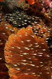 fiskexponeringsglas royaltyfria bilder