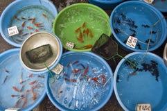 fiskförsäljning Royaltyfria Foton