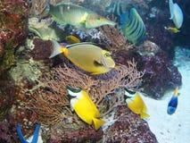 fiskflotta arkivfoton
