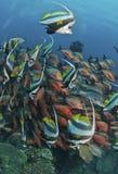 fiskfrenesi royaltyfri fotografi
