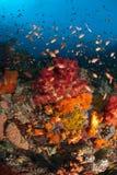 fiskfrenesi Royaltyfria Bilder