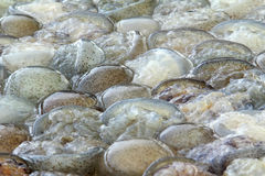 fiskgelé Royaltyfria Foton
