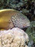 fiskhök Royaltyfri Fotografi
