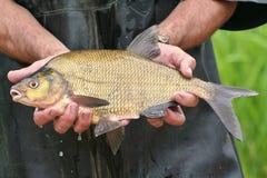 fiskhänder Arkivfoto