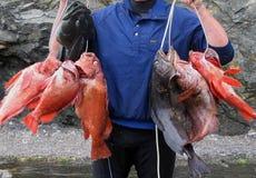 fiskhav Arkivbilder