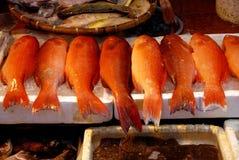 fiskHong Kong röda snapper arkivbilder