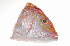 fiskhuvud Arkivfoto