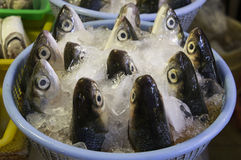 Fiskhuvud Royaltyfri Fotografi