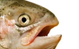 fiskhuvud Royaltyfri Foto
