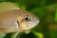 fiskhuvud Royaltyfri Bild
