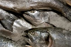 fiskhuvud arkivbilder