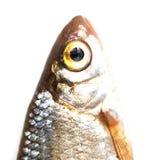 Fiskhuvud Makro Arkivfoton