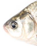 Fiskhuvud på en vit bakgrund Royaltyfri Fotografi