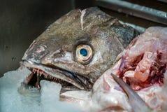 Fiskhuvud på marknaden Arkivbild