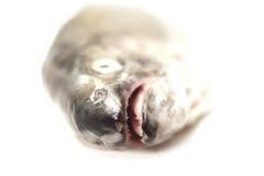 Fiskhuvud på vit bakgrund Royaltyfri Bild