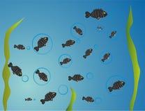 Fiskillustration Arkivbilder