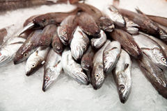 fiskis Royaltyfria Bilder