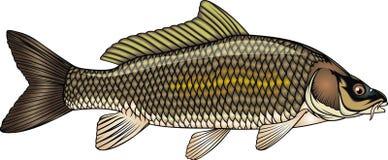 Fiskkarp stock illustrationer