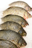 Fiskkarp på is Royaltyfri Foto