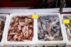 Fisklås av dagen closeup arkivbild