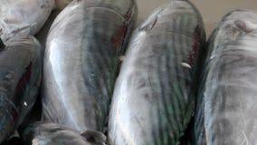 Fisklager som är klart att sälja stock video