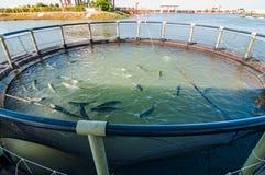 Fisklantbruk på Thailand Fotografering för Bildbyråer