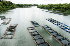 Fisklantgård Royaltyfri Foto