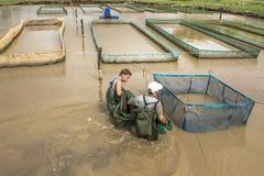 Fisklantgård royaltyfri fotografi