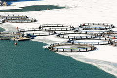 Fisklantgård i den djupfrysta sjön Arkivbild