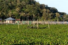 Fisklantgård på sjön Tondano Royaltyfria Foton