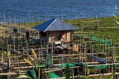 Fisklantgård på sjön Tondano Royaltyfri Foto