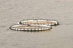 Fisklantgård Arkivbild