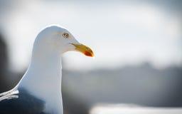 fiskmås Royaltyfri Fotografi
