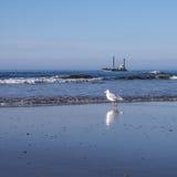 Fiskmås och skepp på stranden Arkivfoton
