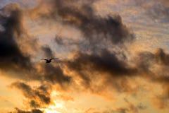 Fiskmås seagull, himmel, moln, solnedgång, fluga, höst, bakgrund royaltyfria bilder