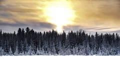 Fiskmås sjö Alberta Fotografering för Bildbyråer